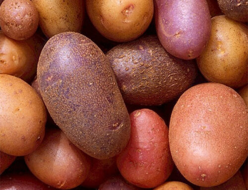 Potato Planting Pointers