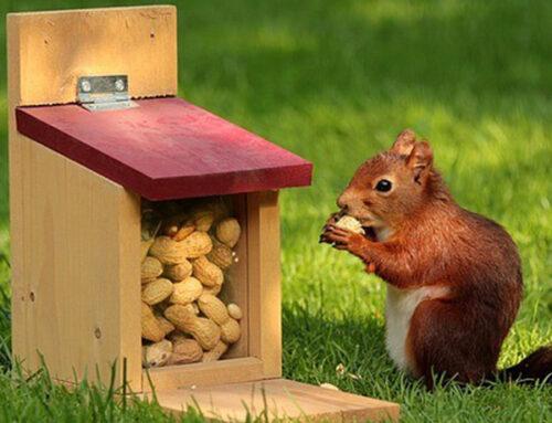 Danger of Feeding Raw Peanuts to Squirrels